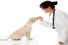 Veterinary Pharmaceutical & Animal Health