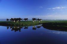 Stockfeed & Animal Nutrition