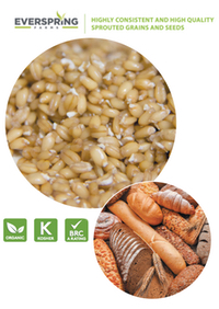 srouted grains and seeds