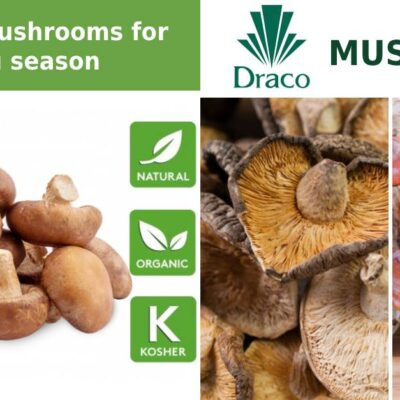 Draco Mushrooms – Shiitake
