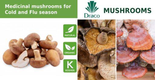 Draco Mushrooms – Shiitake
